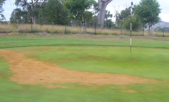 Treatment of Pythium Blight in Golf COurse Turf UAE