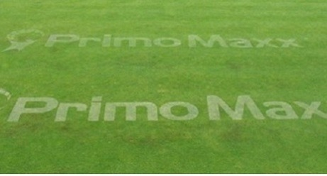 Primo logo in turf